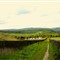 Yorkshire scene