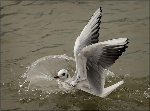 seagull-water