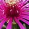 Flower (sat +10, lum +10, con +5, ritaglio, sharp +40) (100) IMG_3884 (questa)