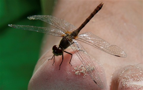 dragonfly perch 4
