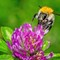 Garden_macros_07_2021_035