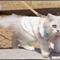 kitten on a leash
