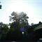 tree&sun_20110816_001