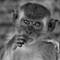 Monkey - HDR (1036x1280)