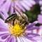 Bee-4252