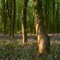 Spring in Denge Wood