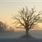 oak-fog