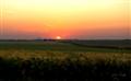Midwestern Farmland