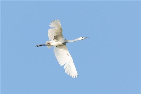 bird-1432