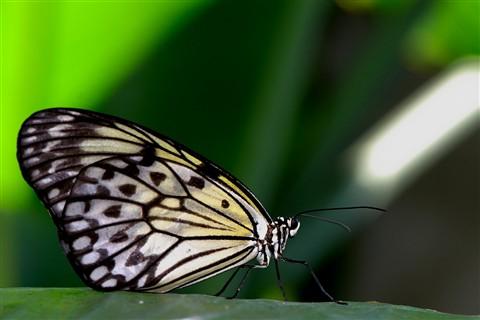 Butterfly_04
