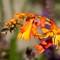 Garden macros-20140717-0016