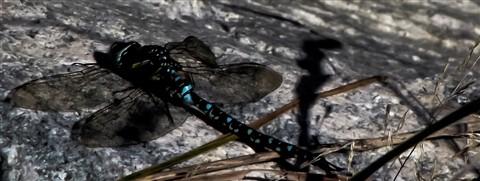 Dragonfly Autumn Break