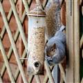 SQ N bird feed