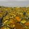 Bandung City, bw and Yellow