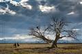 Two-Horses-&-Tree