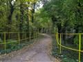Forest lane !