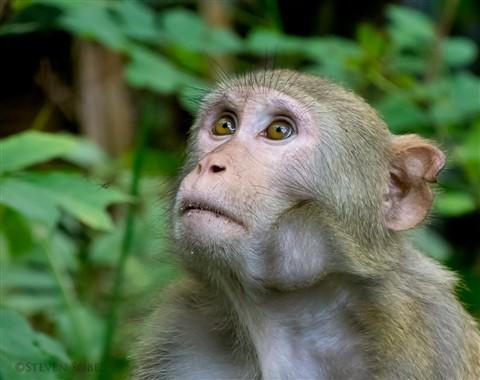 Wild-Monkey-in-Florida-small