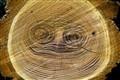 Face in Log