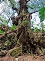 Roots&Rocks