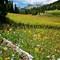 BonnevilleMdw_FlowersLog_SublettePk_TetonNF_XS1XS_080806_900px_reduced
