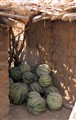Melons in the shade