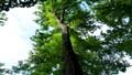 LIEPZIG TREE