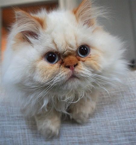 Simply kitten 2