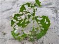 Nature's delicate design