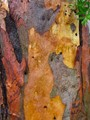 Colours of Tree Bark