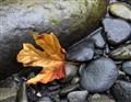 Autumn Prelude
