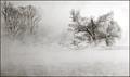 B&W Snow Mist Geese