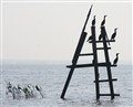 Anhingas in silhouette