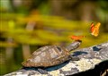 Turtle with Butterflies