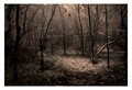 IMJ_6218 - Forest