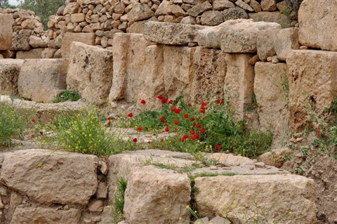red poppies in the ancient site