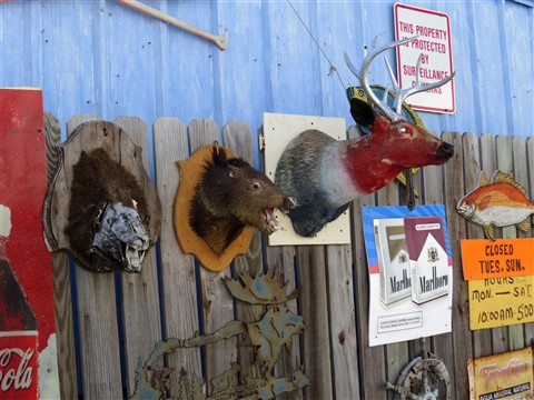Wild Life in Rockport, Tx