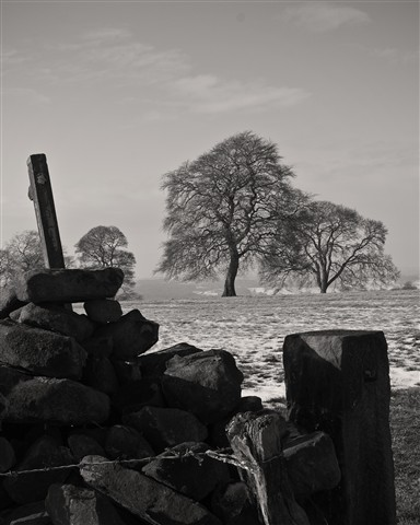 Frosty Gatepost and Tree