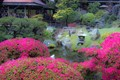 Tea house and azaleas
