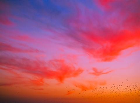crazy_birds