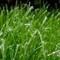 Frosty Grass: