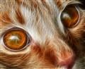 Electric Cat Eyes......