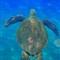 sea turtle 1_005