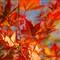 autumn 2010 138