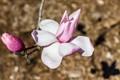 Spring (1 of 1)