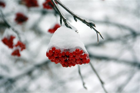 2011-01-01 Winter
