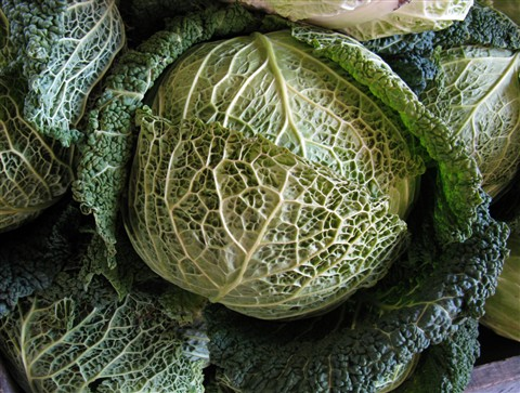 Cabbage_4284