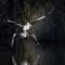 pelican05062020_580v2
