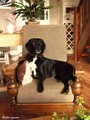 Lazy chair for Sanne