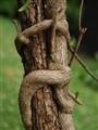 Ivy Monkey