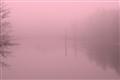 Fog-2012